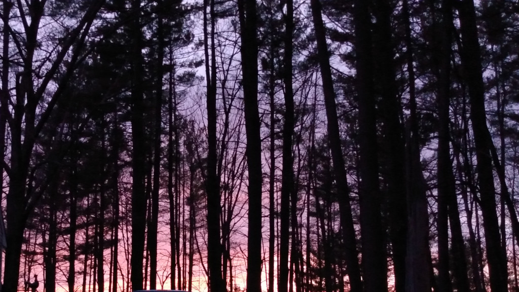Behind silhouetted trees, the sky shaded from pale blue to lavender to salmon to fire.