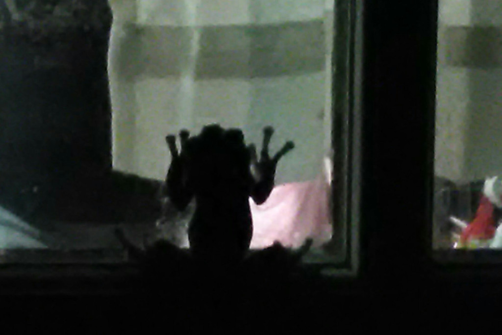 It was silhouetted against the light coming from the kitchen, and pressed against a pane as if peering in.